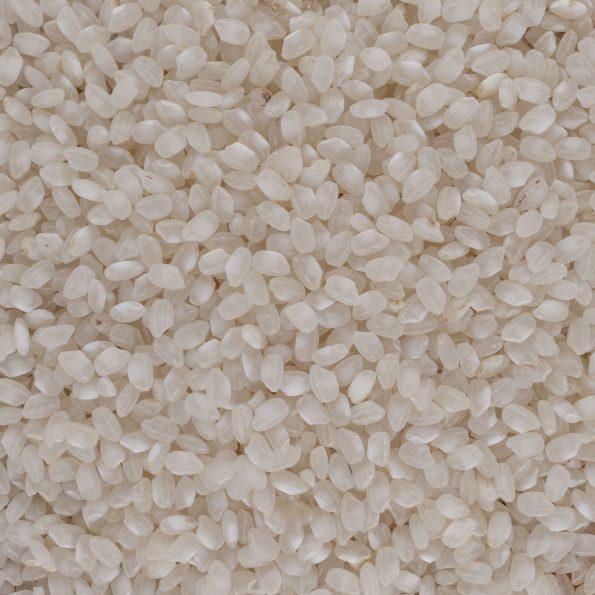 00037-riz-rond-blanc