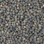 15153-lentilles-vertes-france