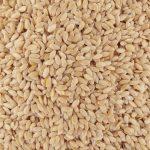 16181-graines-lin-dorées
