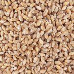 60340-blé-tendre-complet